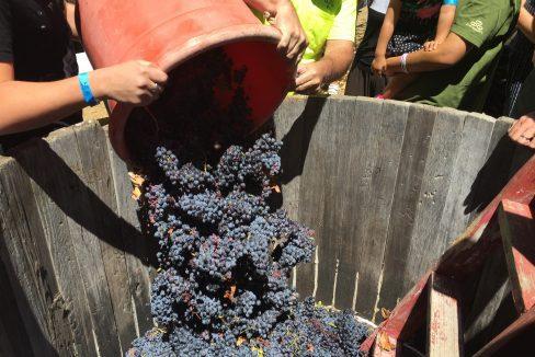 Grape Stompin' and Apple Picking in Julian, California