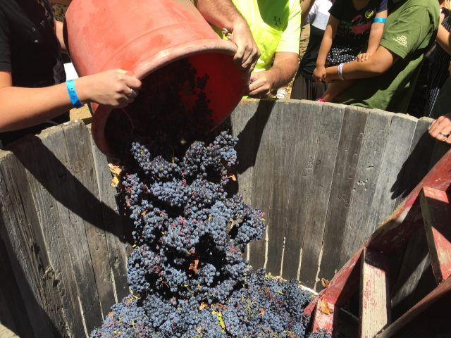 Julian Grape Stomp