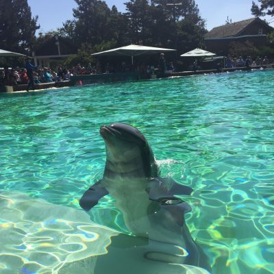 Visiting SeaWorld in San Diego, California