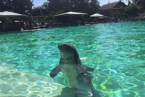 Visiting SeaWorld in San Diego, California