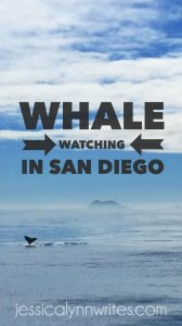 If you're visiting or living in southern California then you have to add whale watching in San Diego to your bucket list!